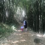 Bamboo archway