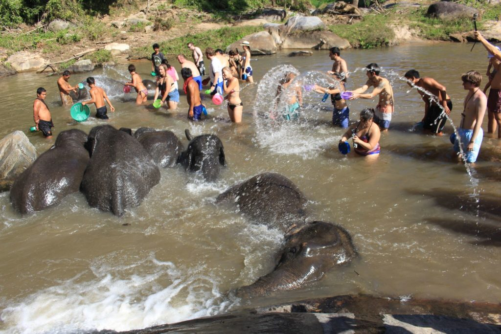 Playing in the waterfall with elephants